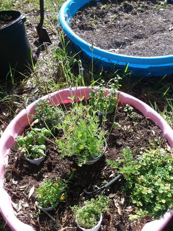 Patio trasero Herb Garden 1 foto de archivo
