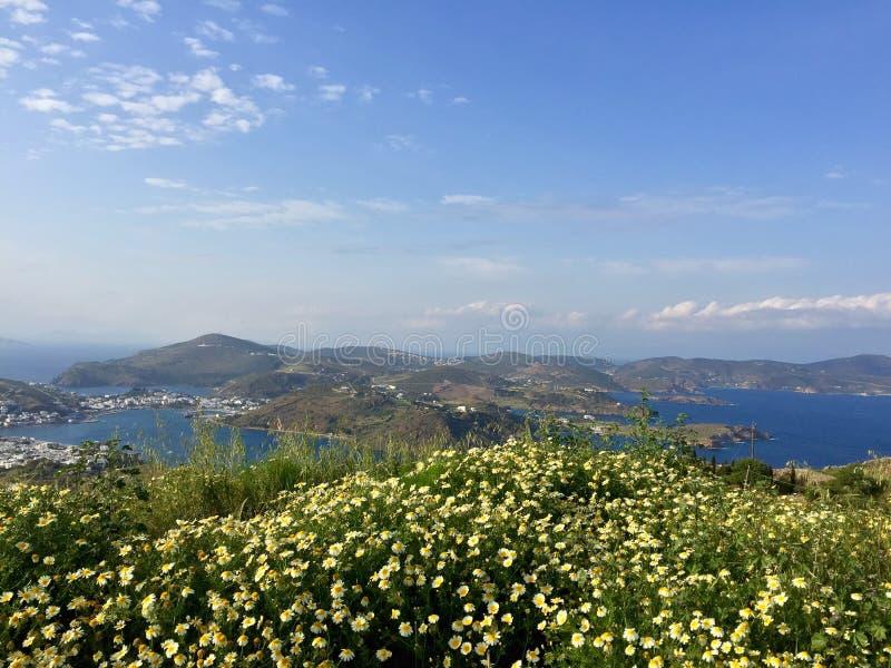 Patmos kwiaty, Grecja zdjęcie royalty free