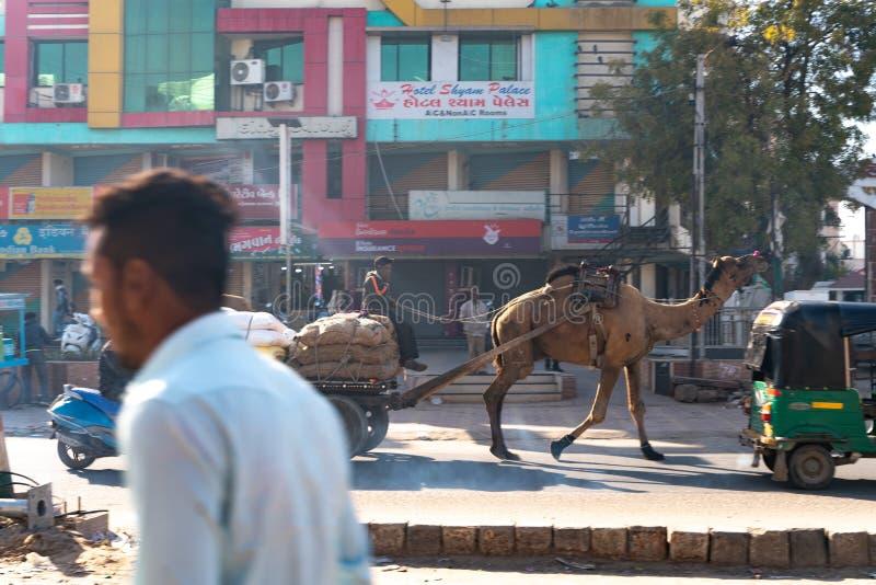 Patna/India-11 02 2019: Ładunku wielbłąd na indyjskiej ulicie zdjęcia stock