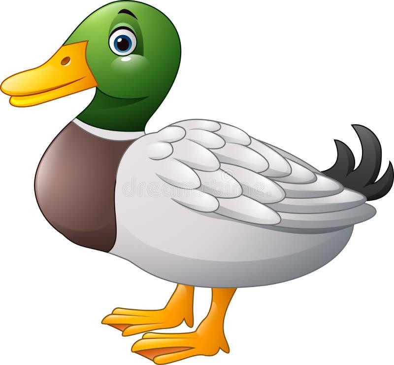 Pato bonito dos desenhos animados ilustração royalty free