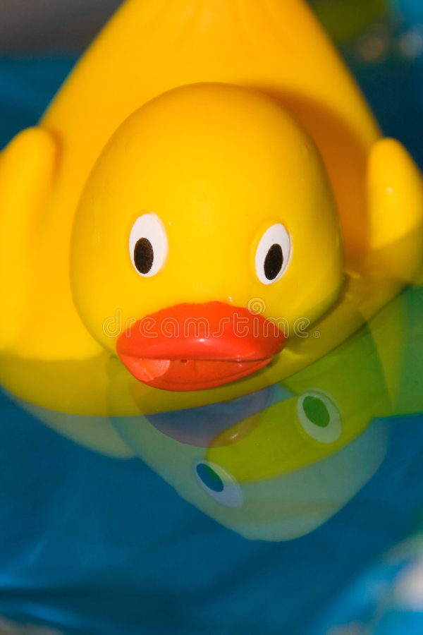 Pato de borracha foto de stock royalty free