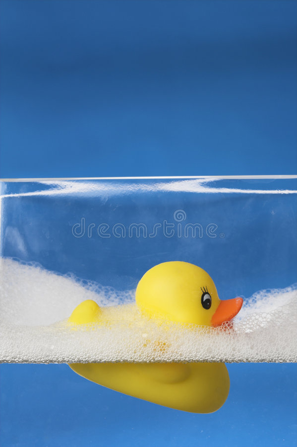 Pato de borracha de flutuação imagens de stock