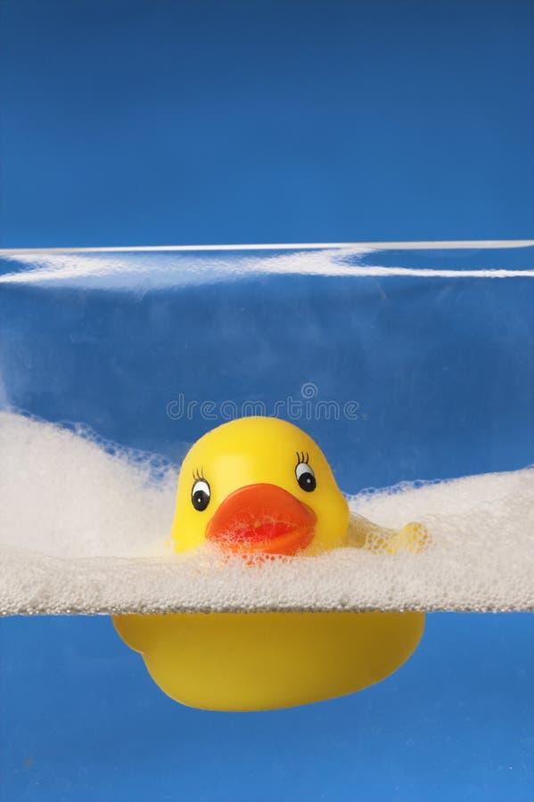 Pato de borracha na água azul fotografia de stock royalty free