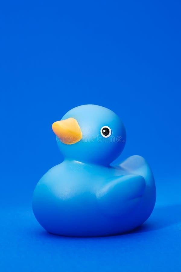 Pato de goma azul en fondo azul imagen de archivo