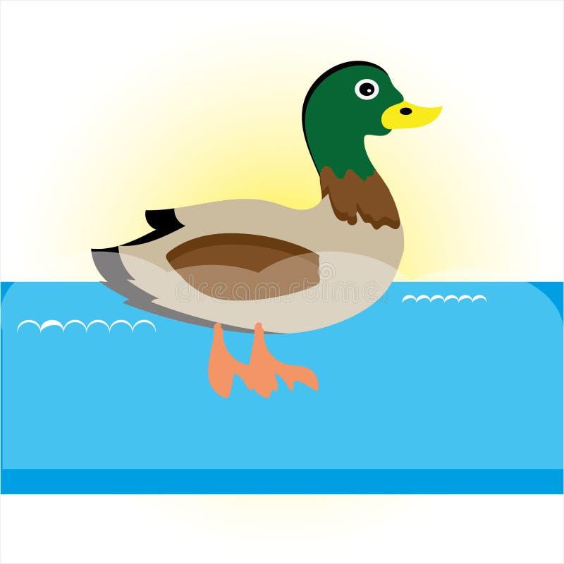 Pato de la natación en el río azul libre illustration