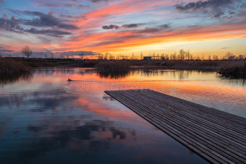 Pato de la puesta del sol del paisaje imagen de archivo libre de regalías