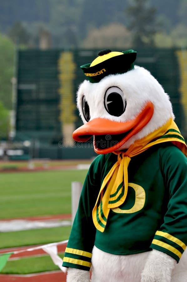 Pato de Oregon imagem de stock royalty free