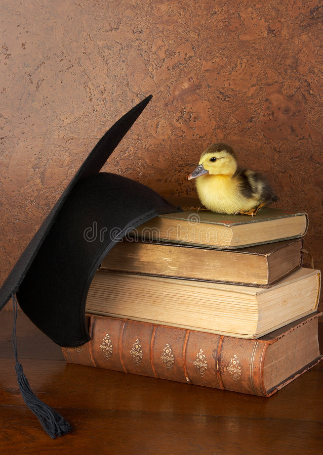 Pato de Pascua en los libros imagen de archivo