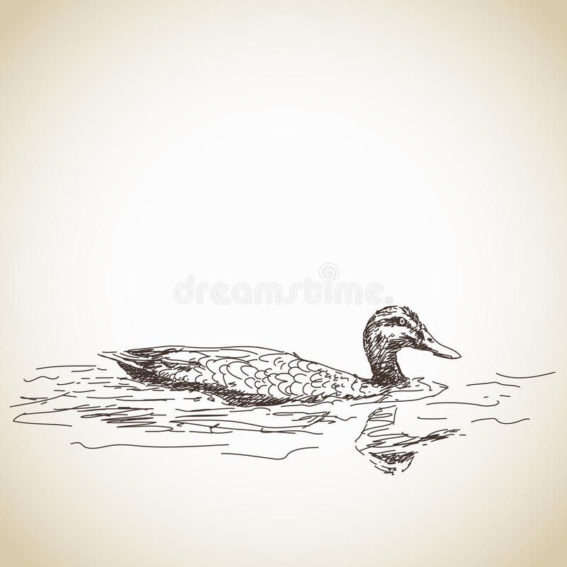 Pato en agua stock de ilustración