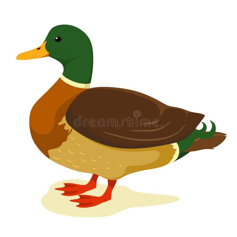 Pato lindo en estilo de la historieta Ilustraci?n del vector en el fondo blanco Pato stock de ilustración