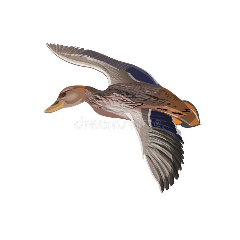 Pato selvagem de voo ilustração do vetor