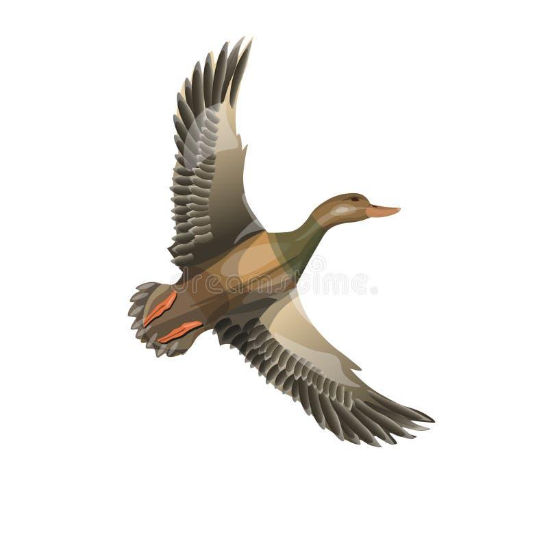 Pato selvagem de voo ilustração royalty free