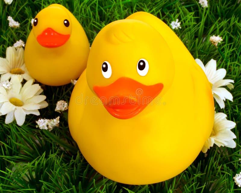 Pato y anadón de goma foto de archivo libre de regalías