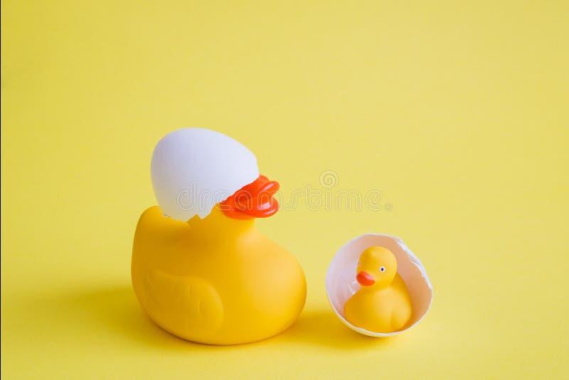 Pato y anadón en extracto del nacimiento de la cáscara de huevo en fondo amarillo foto de archivo libre de regalías