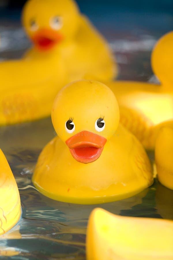 Patos 2 da borracha fotos de stock royalty free
