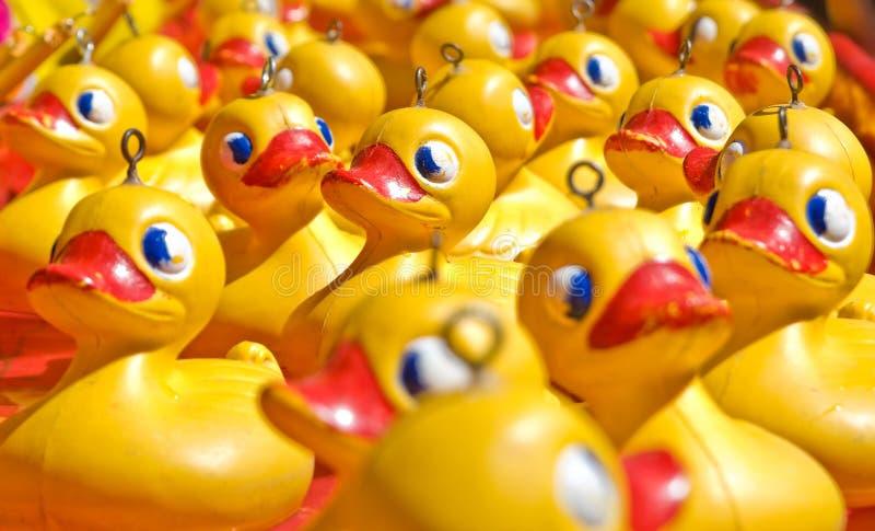 patos amarelos da borracha do brinquedo   foto de stock royalty free