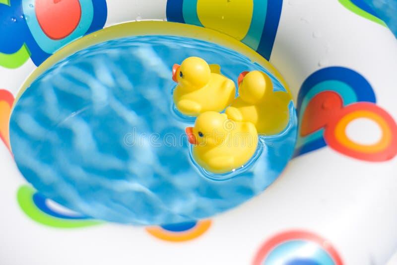 Patos da natação ilustração do vetor