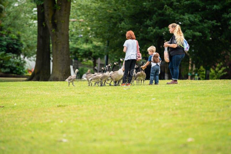Patos de alimentación de la familia en el parque imagenes de archivo