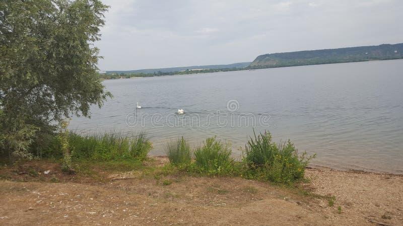 patos del lago que encanta, lago imagen de archivo