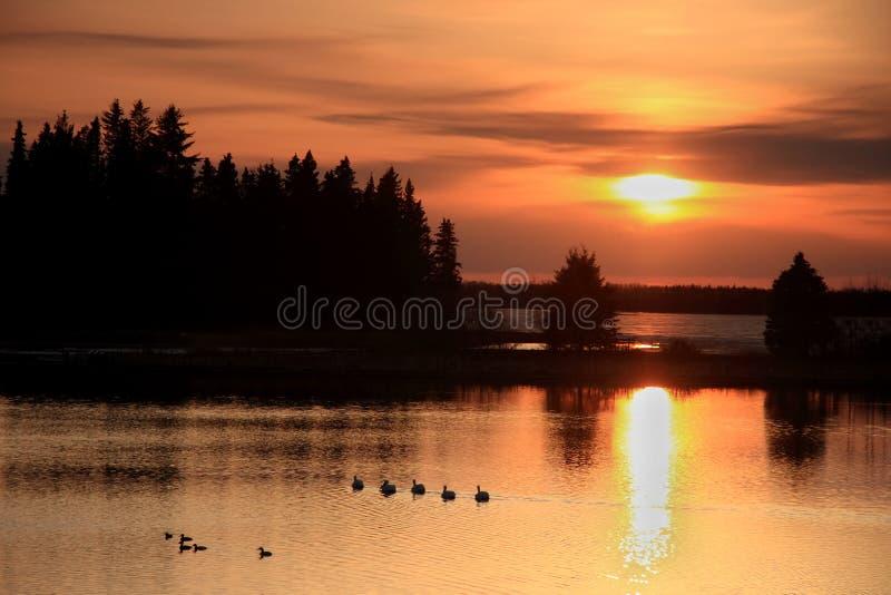 Patos en la puesta del sol imagen de archivo