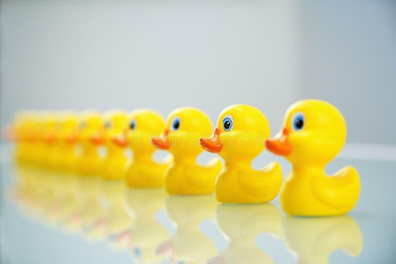 Patos en una fila imagenes de archivo