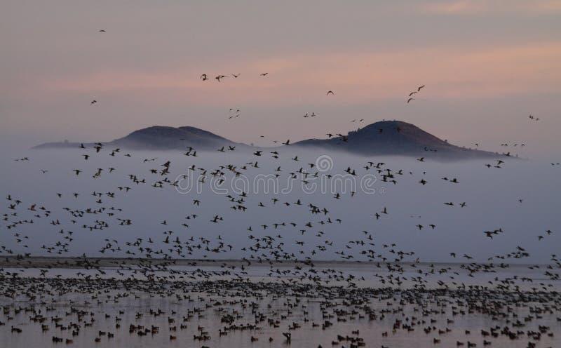 Patos migratorios y montañas de niebla imagenes de archivo