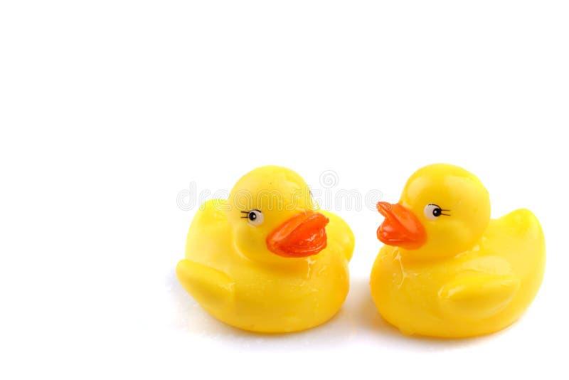 Patos Mojados Fotografía de archivo