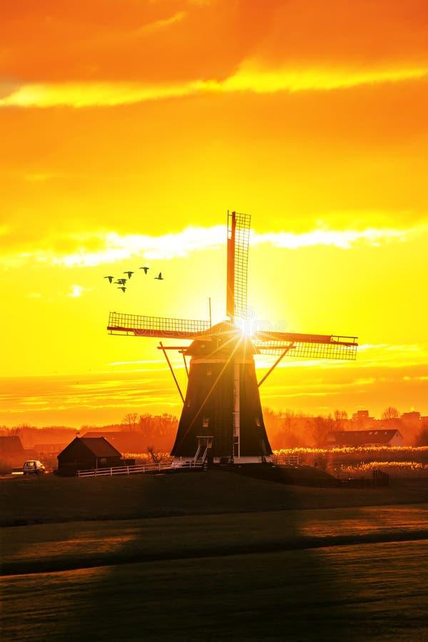 Patos que fying sobre um amanhecer bonito e um Kinderdijk morno s foto de stock