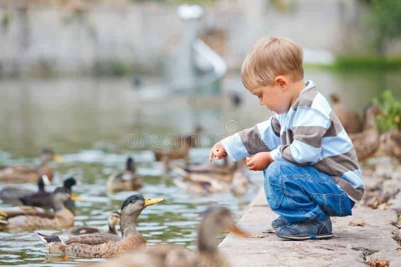Patos que introducen del niño pequeño lindo imagen de archivo libre de regalías
