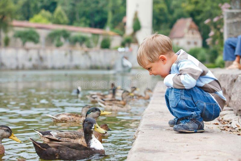 Patos que introducen del niño pequeño lindo fotos de archivo