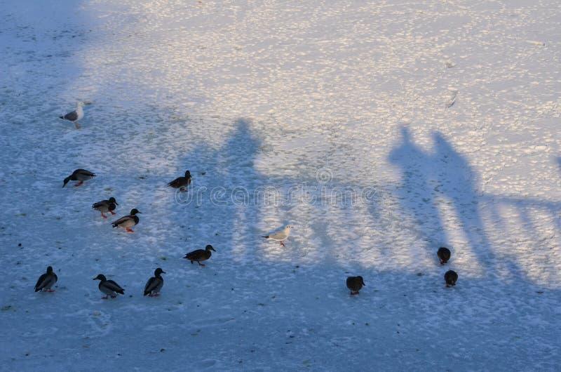 Patos y gente foto de archivo libre de regalías
