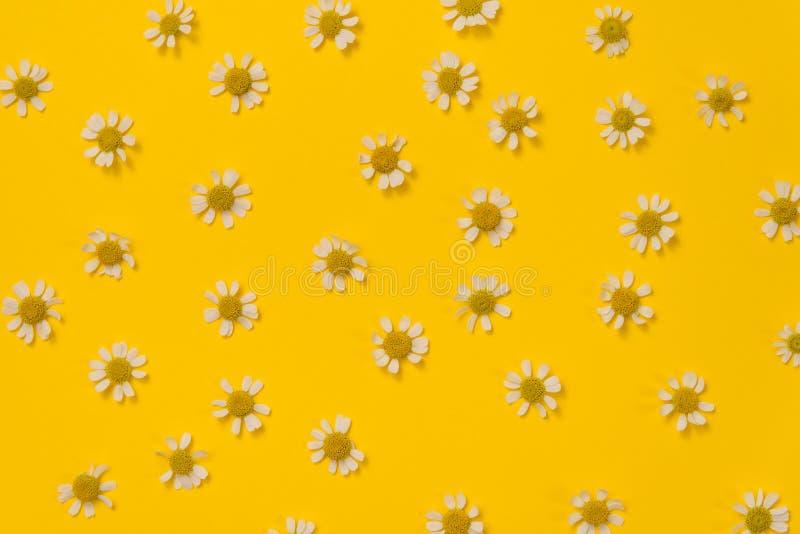 Patrón de flores de manzana sobre fondo amarillo fotografía de archivo