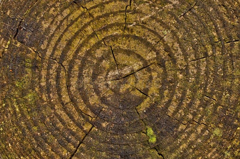 patrón de troncos de madera cortado imagen de archivo