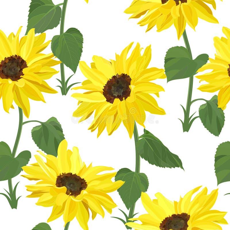 Patrón floral transparente de girasoles amarillos altos sobre tallos con hojas grandes sobre fondo blanco ilustración del vector