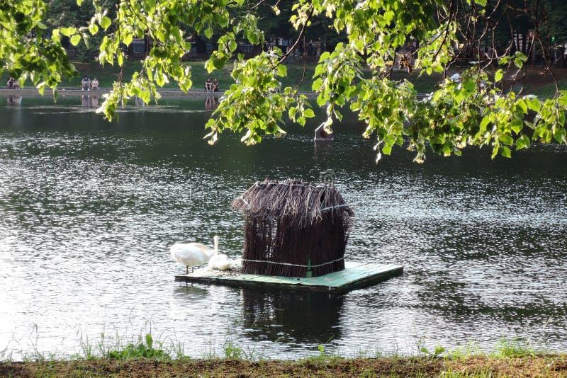 Patriarshiye池塘在莫斯科 天鹅的房子 库存照片
