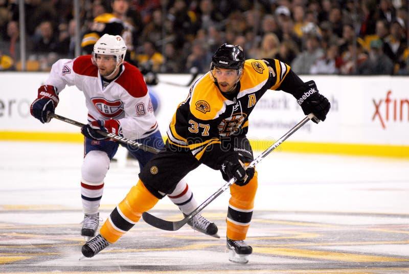 Patrice Bergeron Boston Bruins. Boston Bruins Forward Patrice Bergeron #37 royalty free stock photography