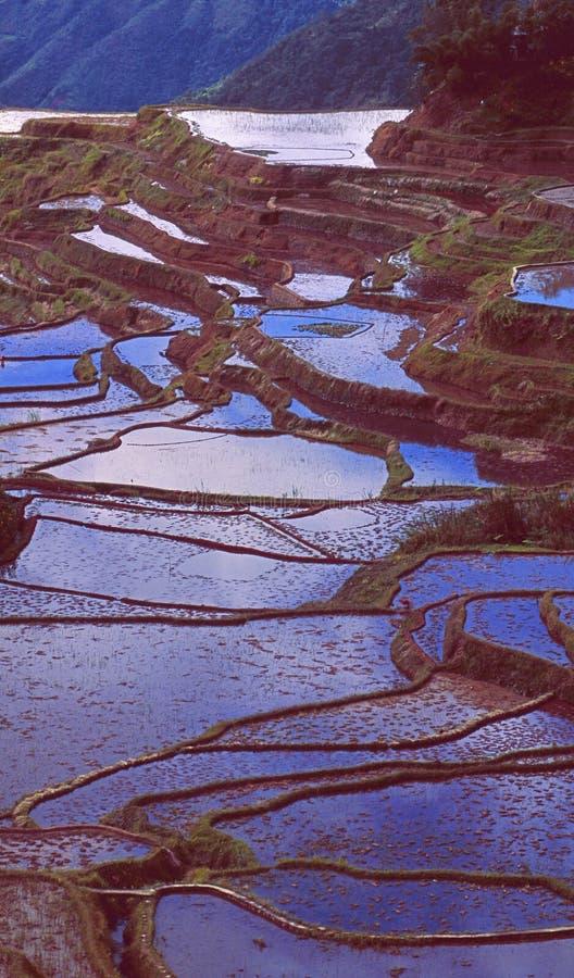 Patrimoine mondial de l'UNESCO : Les terrasses de riz de Banaue photographie stock