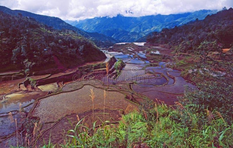Patrimoine mondial de l'UNESCO : Les terrasses de riz de Banaue sur l'île de Luçon aux Philippines photos libres de droits