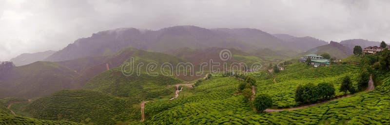 Patrimoine pluvieux de thé en Malaisie images libres de droits