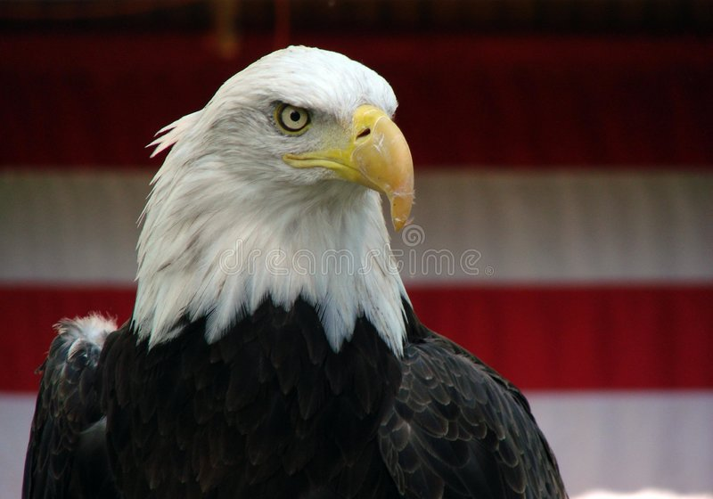 Patriot's eye royalty free stock images
