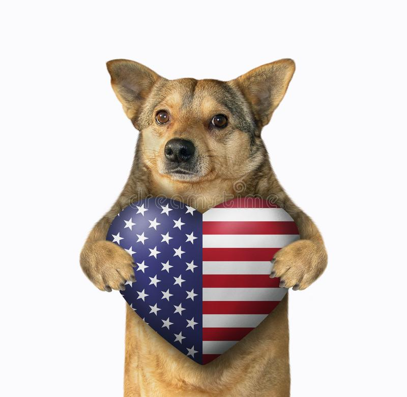 Patriota do cão com um coração americano fotografia de stock