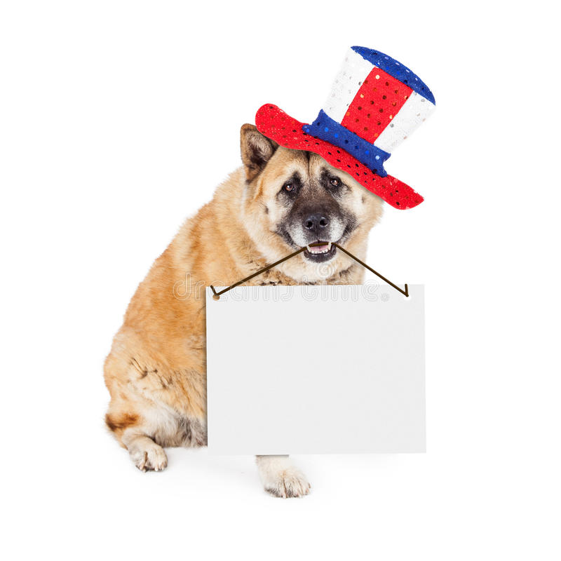 Patriotic American Dog Carrying Blank Sign. A large patriotic Akita breed dog sitting on a white background wearing a red, white and blue hat while holding a royalty free stock photo