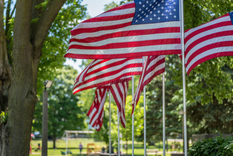 Patriotic American flags wave in front of park in summer royalty free stock photo