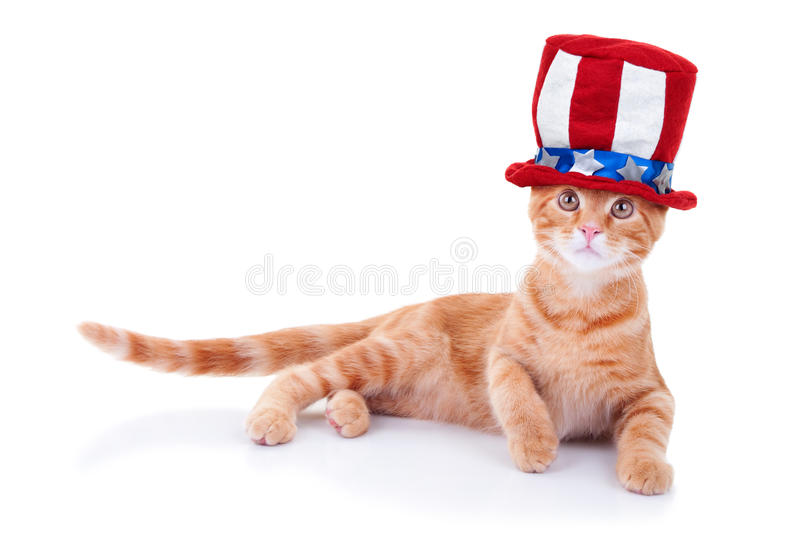 Patriotic Cat. Isolated on white