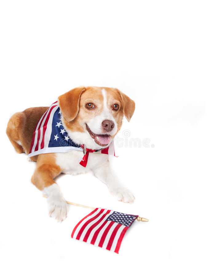 Patriotic Dog royalty free stock image