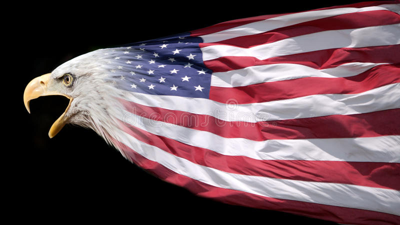 Patriotic eagle and flag. Patriotic eagle blended with US flag stock photos