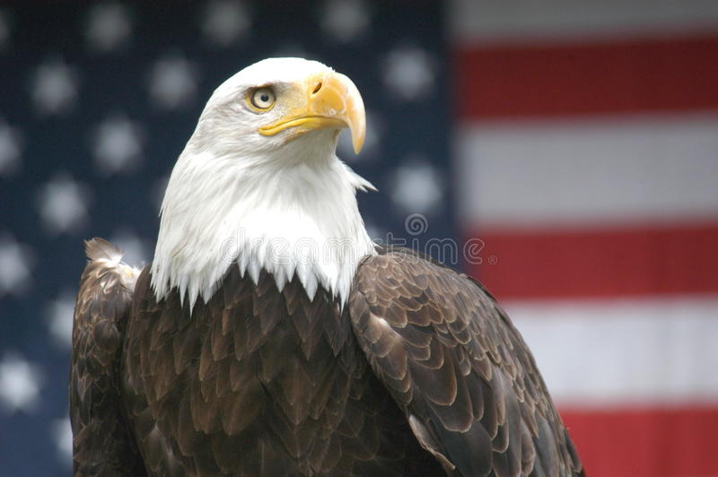 Patriotic Eagle royalty free stock photo