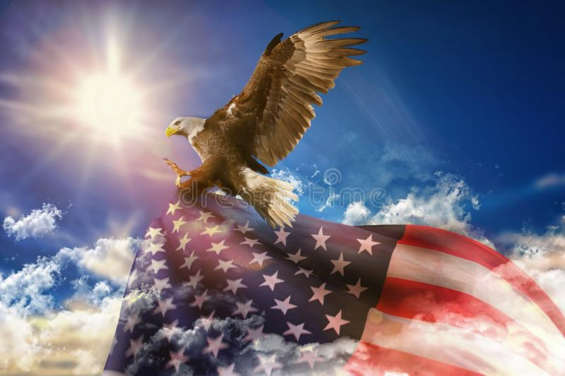 Patriotic eagle taking wing with of US flag royalty free stock photos