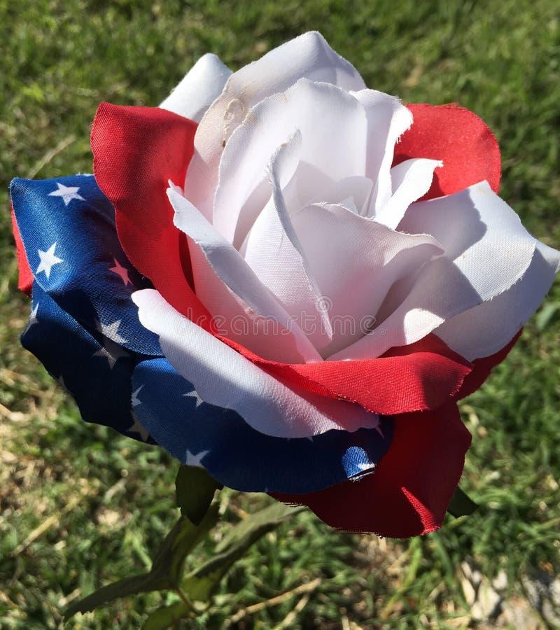 Patriotic flower stock photos