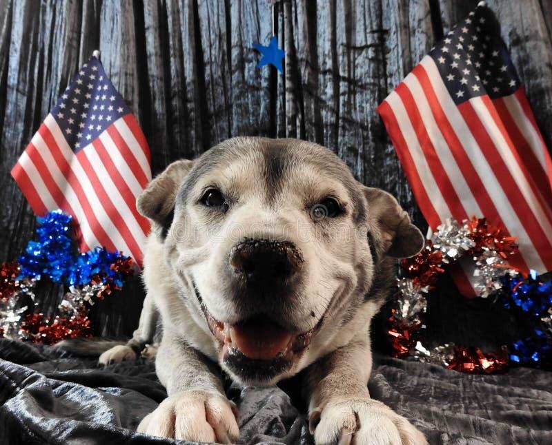 patriotic fotografia de stock